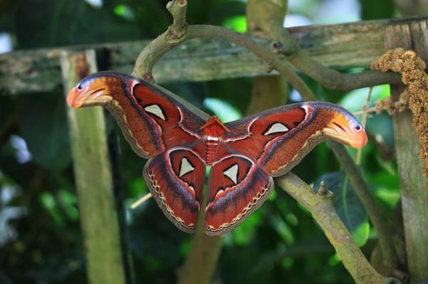 IMG_0834 Moth