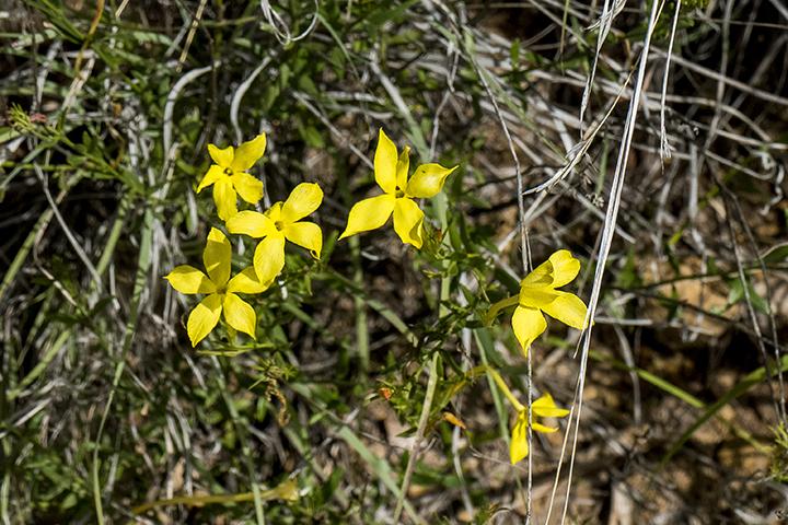P1080156 Flowers