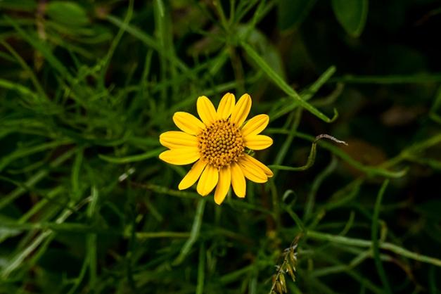 P1080167 Flower