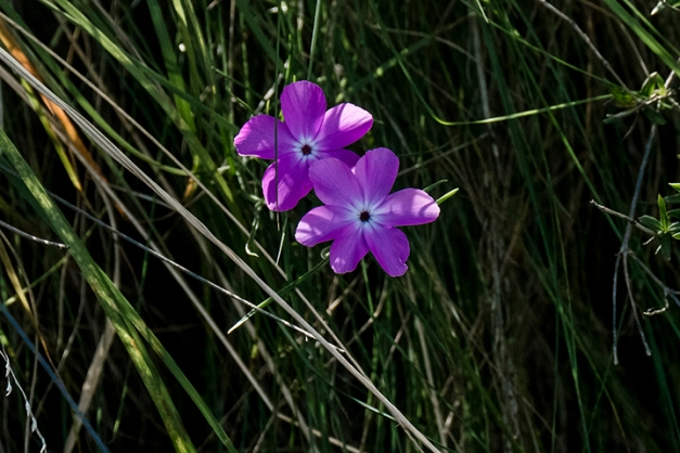 P1080369 Flowers South Rim