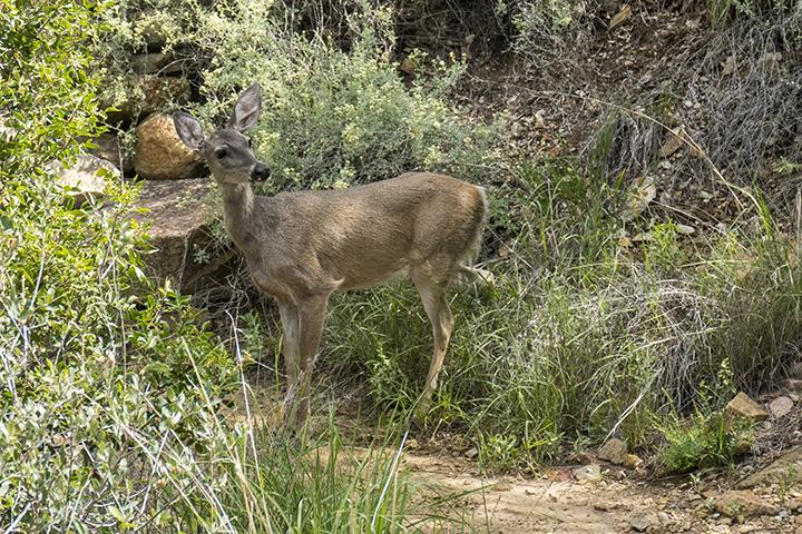 P1080377 Deer Laguna Trail
