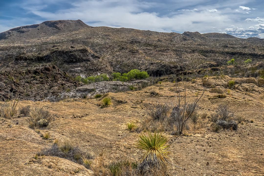 P1100907 desert spring