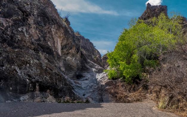 P1100916 desert spring